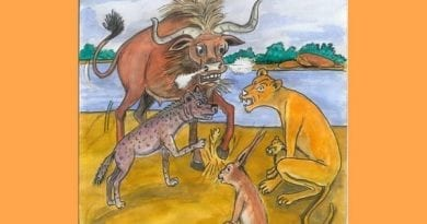 conte du mali - lion roi