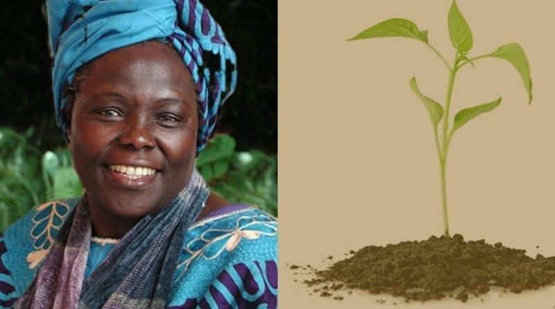 Wangari MAATHAI (Prix Nobel de la Paix 2004)