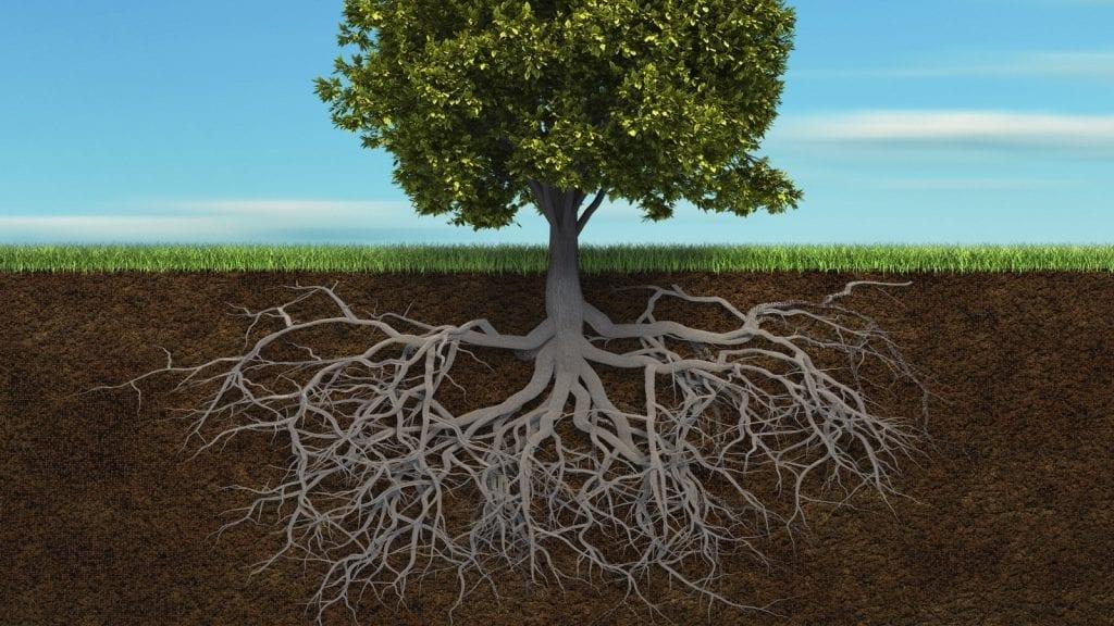 Wangari MAATHAI, les racines de l'arbre